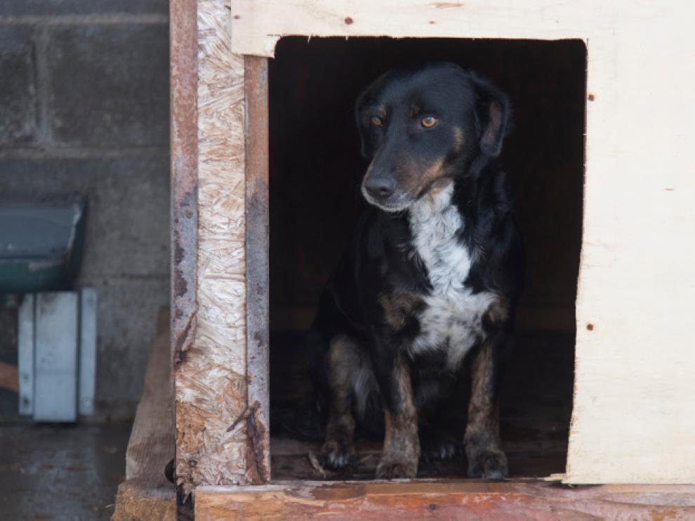 El contrato incluye la recogida de perros, su custodia y mantenimiento.