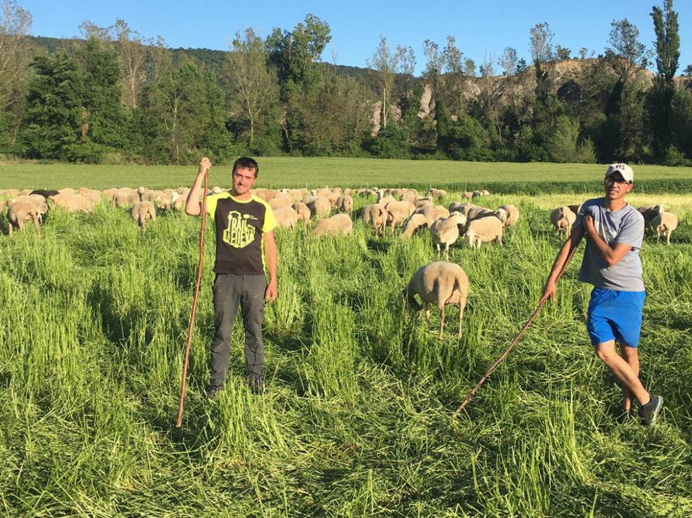 Los hermanos Sergio y Santi Citoler han apostado por el ovino para continuar en Tierrantona