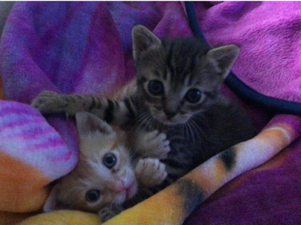 Luca y Merlín, dos gatitos rescatados