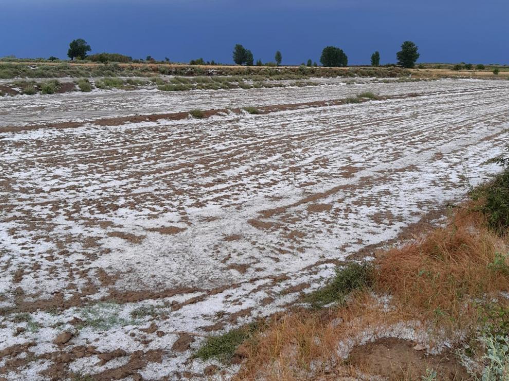 Un campo cubierto con granizo ayer en Tardienta.