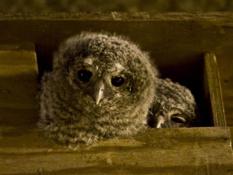 """Las cajas nido y el """"hotel de insectos"""" sirven para conseguir mayor protección de la biodiversidad."""
