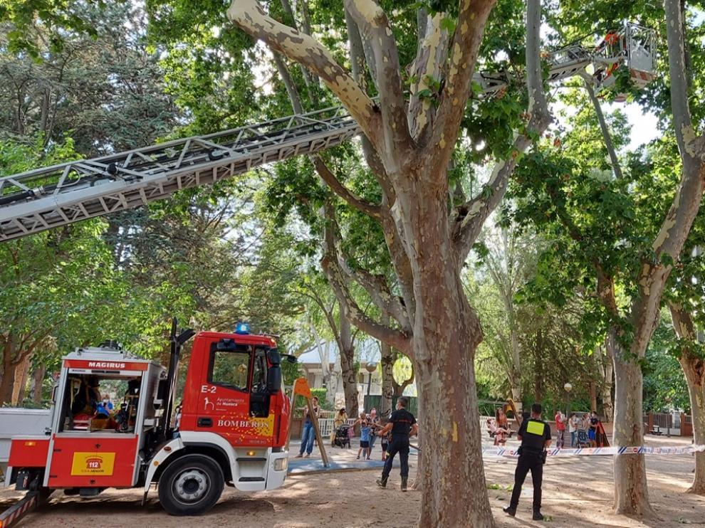 Actuación de los bomberos en el parque de Huesca.