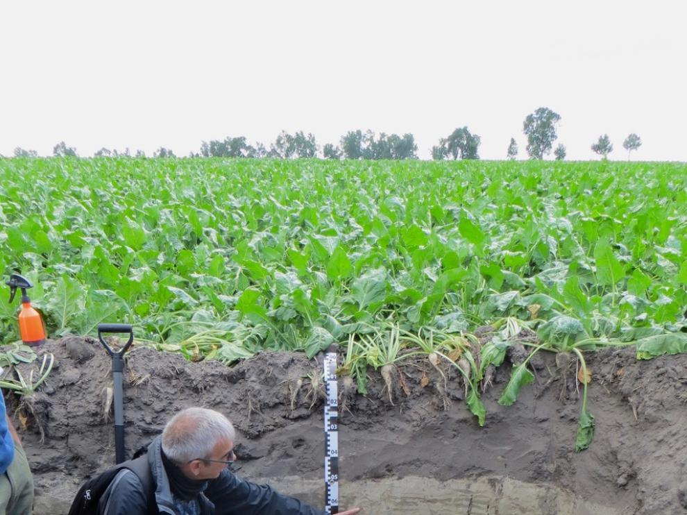 Badía explica propiedades de un suelo cultivado con remolacha.