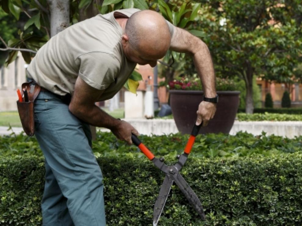 El servicio de jardinería es uno de los contratos que el Gobierno de Aragón reserva para este colectivo.