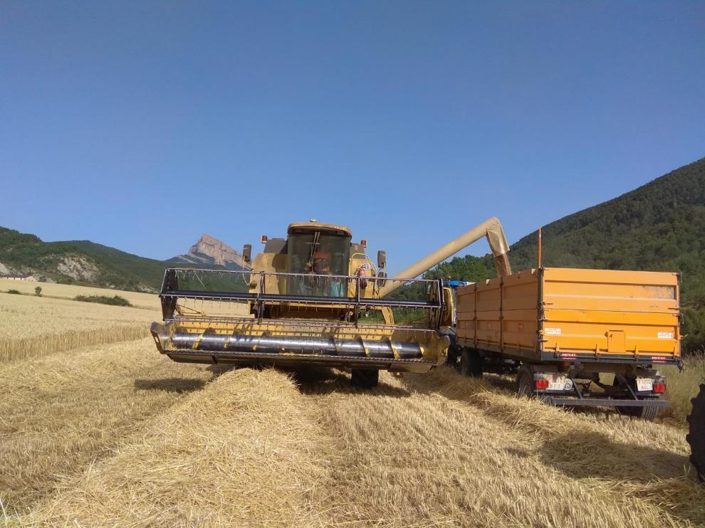 Trabajos de una cosechadora en un campo de la provincia.
