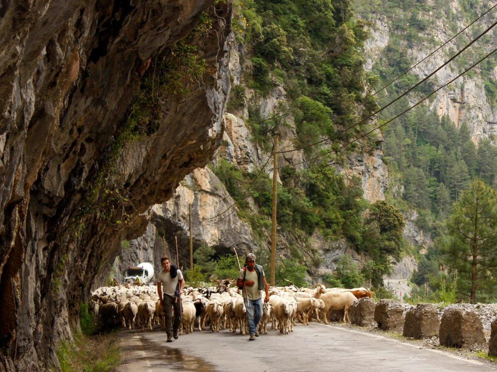 La Escuela de Pastoreo de Aragón 'La Estiva' echa a andar