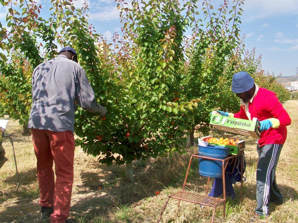 Trabajadores en un campo del Bajo Cinca durante la campaña del 2020