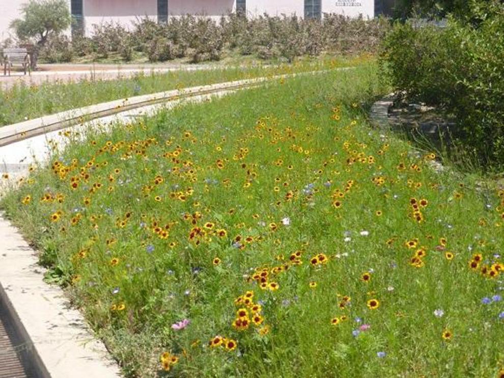 Isla de biodiversidad en el Polígono 41 de Huesca en plena floración