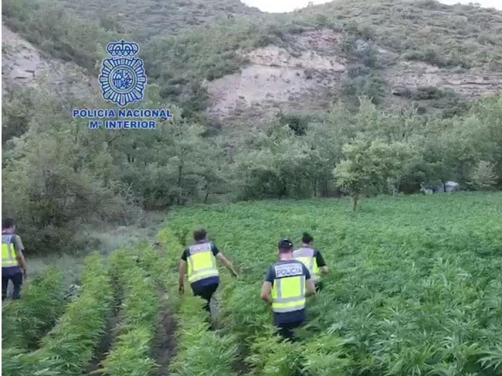 Agentes de la Policía Nacional inspeccionando una de las plantaciones.