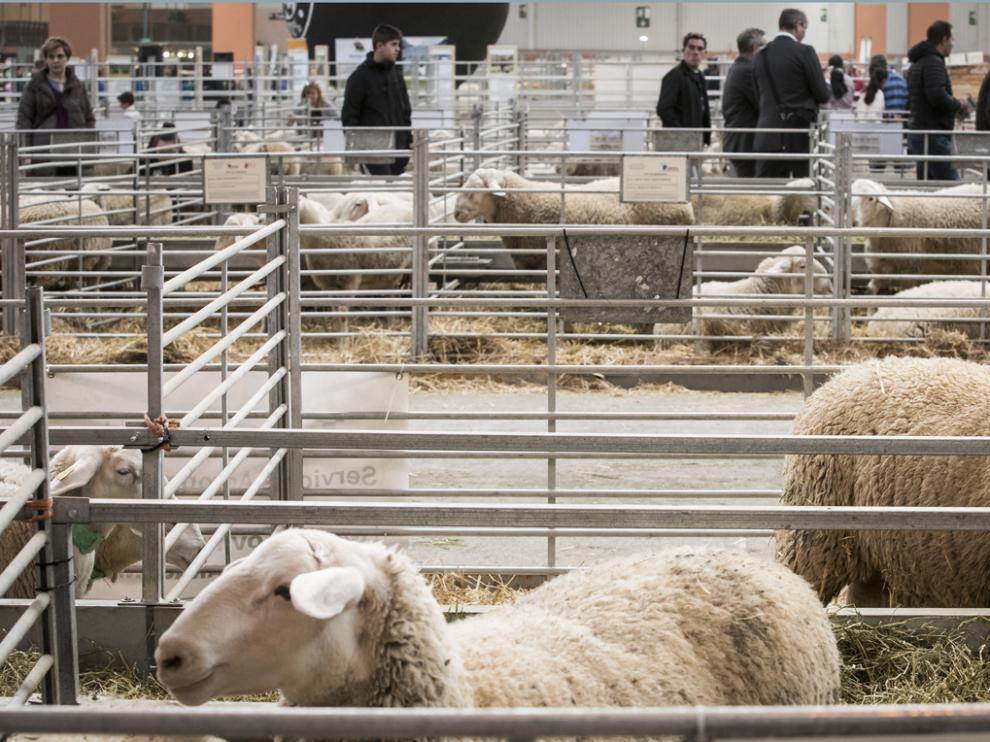 La nueva edición contará con la presencia de más de 750 cabezas de ganado de distintas razas.