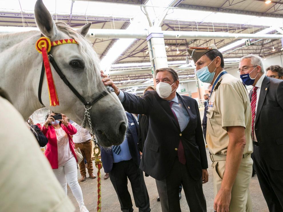 El ministro Luis Planas acaricia un caballo durante su visita de ayer a Figan.