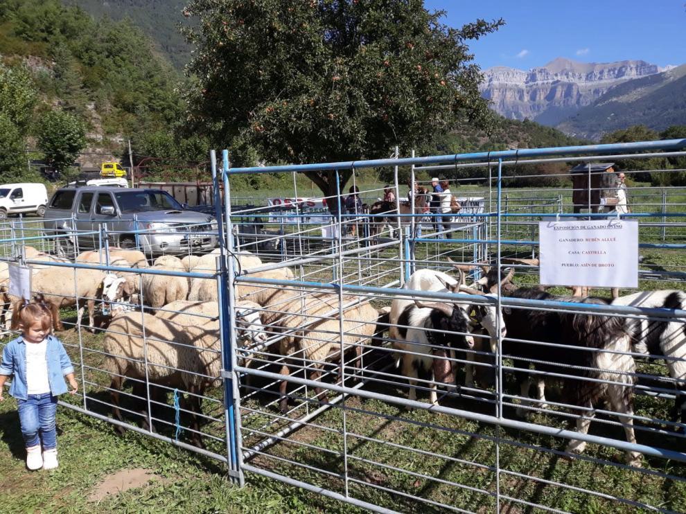 Imagen de archivo de la Feria Ganadera en Broto